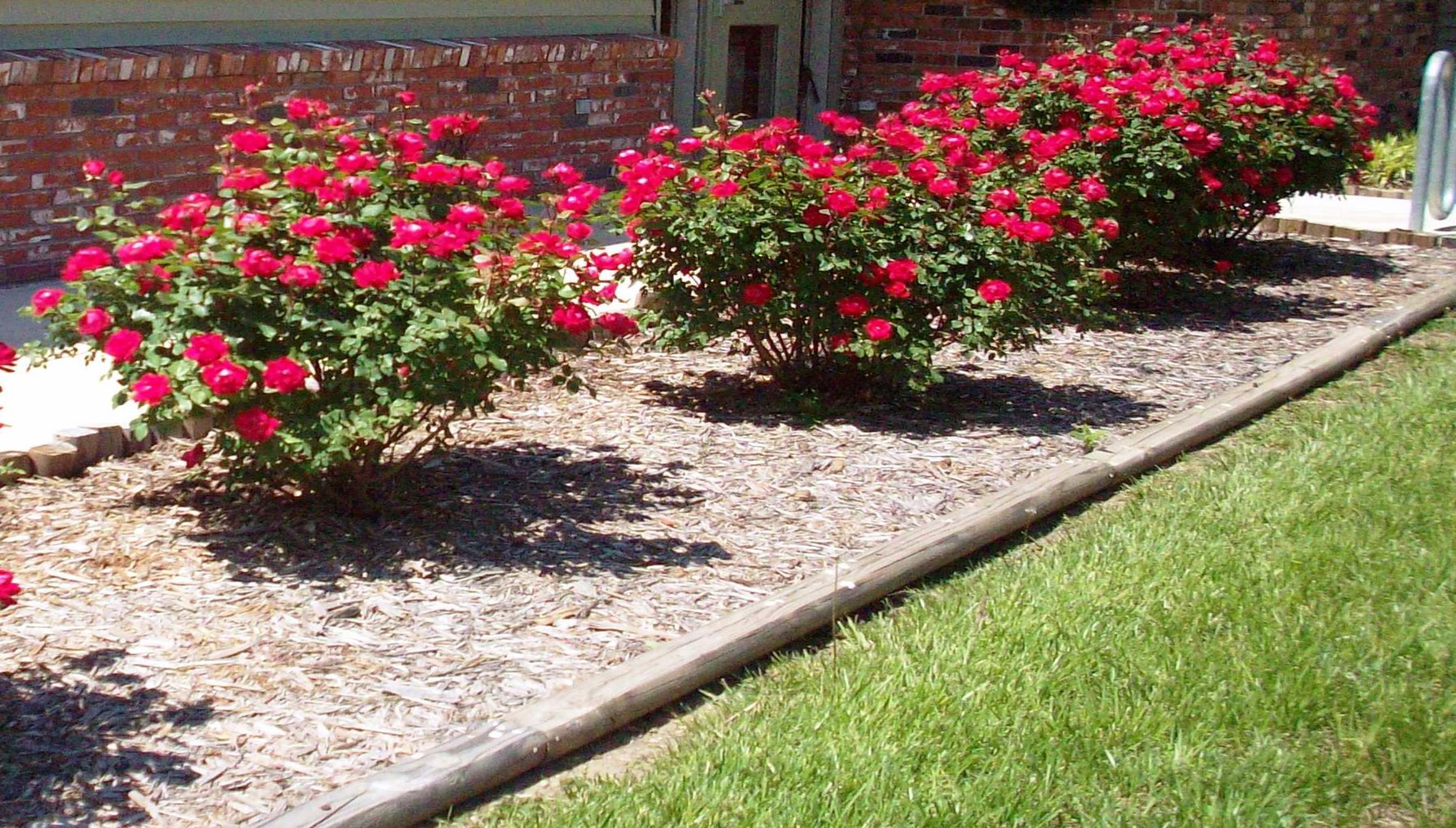 locul-potivit-pentru-trandafiri